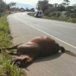 Bitrem tomba na BR-158 após motorista desviar de cavalos que atravessam a pista