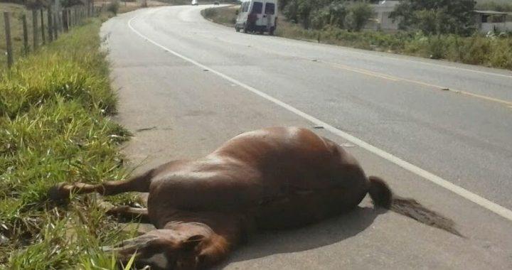 Cavalo-estrada